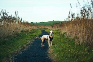 #4 – Mais il est où le chien ? …  L'anxiété.